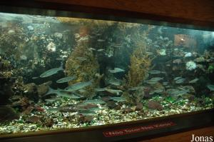 One of the tank with native fish species