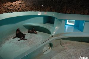 Pool for the fur seals in Aquario Vasco da Gama