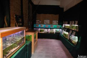Room for amphibians in Aquario Vasco da Gama