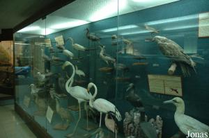 Museum part in Aquario Vasco da Gama