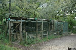 Cages for guenon, vervet and rhesus monkeys